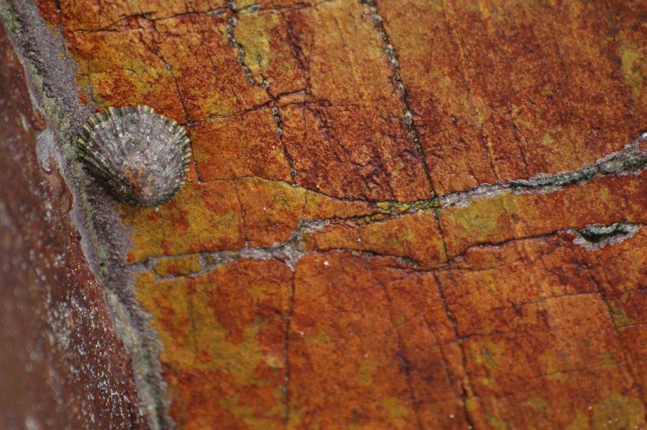 Rochers & lichens